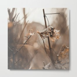 Ready for Spring. Metal Print