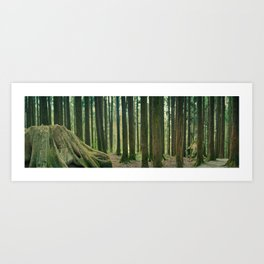 Taiwan Forrest Art Print