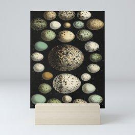 Naturalist Eggs Mini Art Print