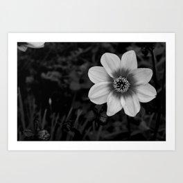 Shine in the Grey Art Print