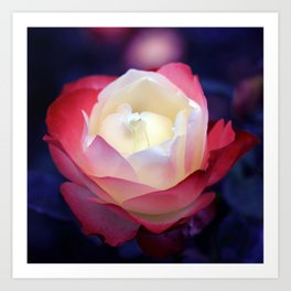 bed of roses: night shades Art Print