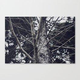 Grace Beneath The Pines II Canvas Print