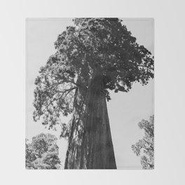 Sequoia National Park VI Throw Blanket