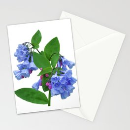 Spring Bluebells Stationery Cards