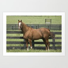 Marquetry -  Old Friends Equine, Georgetown, KY Art Print