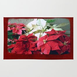 Mixed color Poinsettias 3 Blank P5F0 Rug