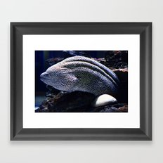 Honeycomb Moray Eel Framed Art Print