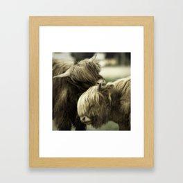 Highland Cattle I Framed Art Print