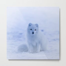 White Snow Fox Softness Metal Print