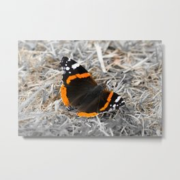 Stunning Red Admiral Butterfly Metal Print