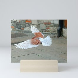 Rock Dove Coming in for a Landing Mini Art Print