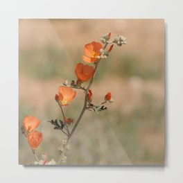 Desert Wildflower - 1 Metal Print
