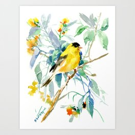American Goldfinch, yellow sage green birds and flowers Art Print
