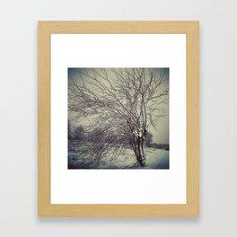 strange tree Framed Art Print