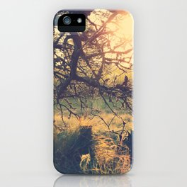 Gnarled old tree in the sun iPhone Case