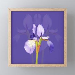 Purple Iris With Fading Iris and Purple Background Framed Mini Art Print