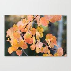 aspen leaves. Canvas Print