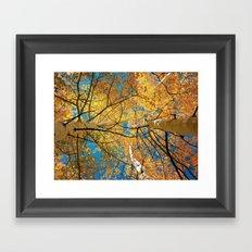 aspens from below Framed Art Print
