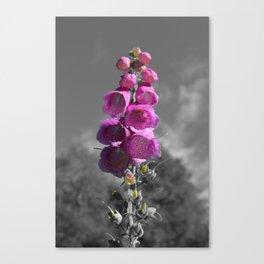 Pretty Pink N° 1 Canvas Print