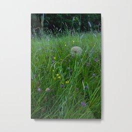 Field of flowers and Dandelions (2) Metal Print