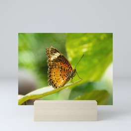 Leopard Lacewing Butterfly Mini Art Print