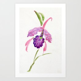 Kat's Other Cattleya Art Print