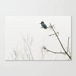 Belted Kingfisher Looking for Prey on a Foggy Day Canvas Print