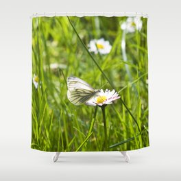 WHITE BUTTERFLY on COMMON DAISY Shower Curtain