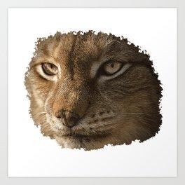 Lynx Face Canvas, Animals, Big Cat, Art Print