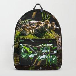 Mallard ducklings on a stone Backpack