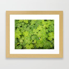Field of clover and a white flower Framed Art Print