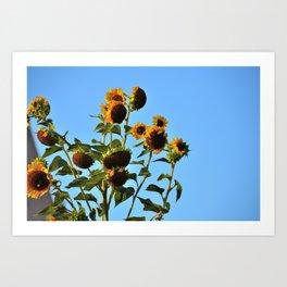 Sunflower Ciel  Art Print