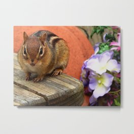 Flower chipmunk Metal Print