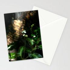 White Flower- Begonia Thelmae Stationery Cards