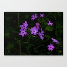 Purple... Canvas Print
