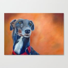 Black greyhound with white bib (a342) Canvas Print