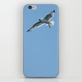 Seagull in Croatia #2 iPhone Skin
