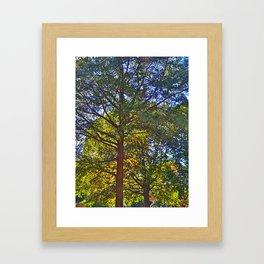 Trees love sun! Framed Art Print