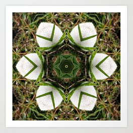 Kaleidoscope of puffball fungus Art Print