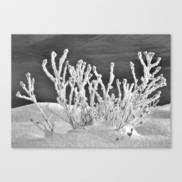 Frosted Plants 2 Canvas Print