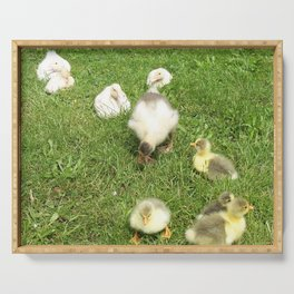 cute baby animals, small ducks and geese on a green meadow in summer Serving Tray