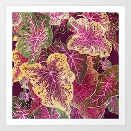 Caladium Art Print