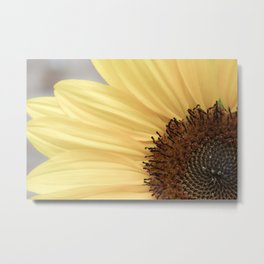 Sunflower Petals Metal Print