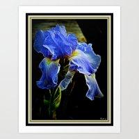 iris Art Prints featuring Iris by elkart51