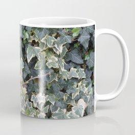 IVY  Plant photo close-up  Coffee Mug
