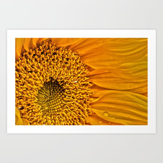 Sunflower 5 Art Print