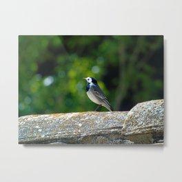 bird sunbathing Metal Print