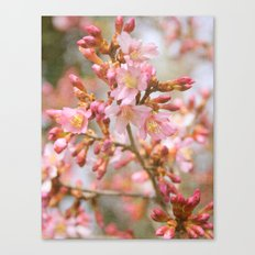 Blossom in the Spring time and fall in love Canvas Print