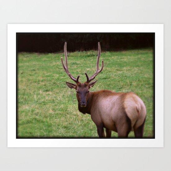Antlers Art Print