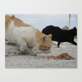 Yay, noms... Canvas Print